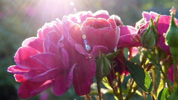 La esperanza, la más pequeña de las virtudes es la más fuerte